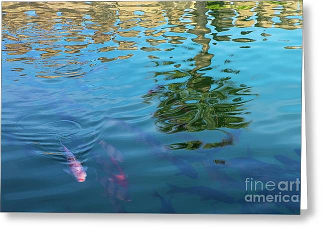 Greeting Card featuring the photograph Fish And Reflections by Brenda Tharp