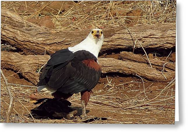 Fish Eagle Greeting Card