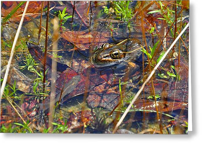 Greeting Card featuring the photograph Fish Faces Frog by Al Powell Photography USA