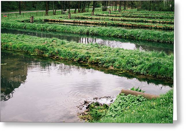 Fish Farm Greeting Card by Pati Photography