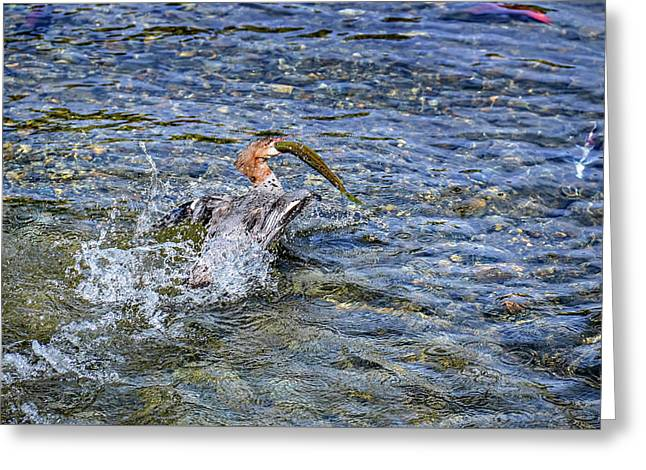 Greeting Card featuring the photograph Fish Gulp by David Lawson