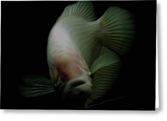 Fish In Tank Greeting Card