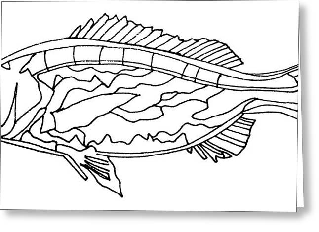 Fish Lines Greeting Card by Baya Clare