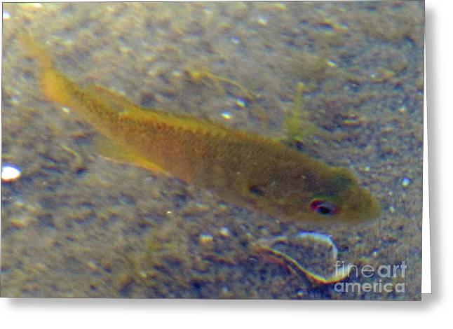 Fish Sandy Bottom Greeting Card
