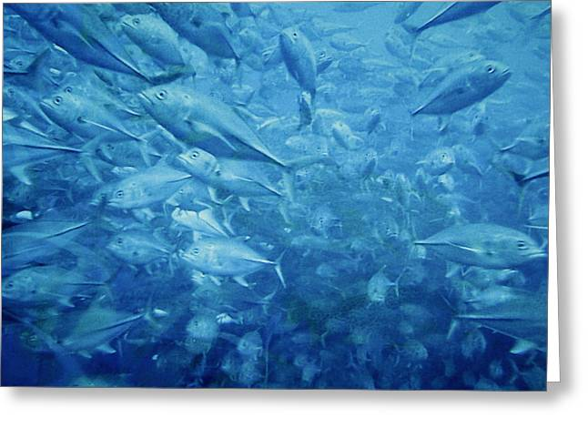 Fish Schooling Harmonious Patterns Throughout The Sea Greeting Card by Christine Till