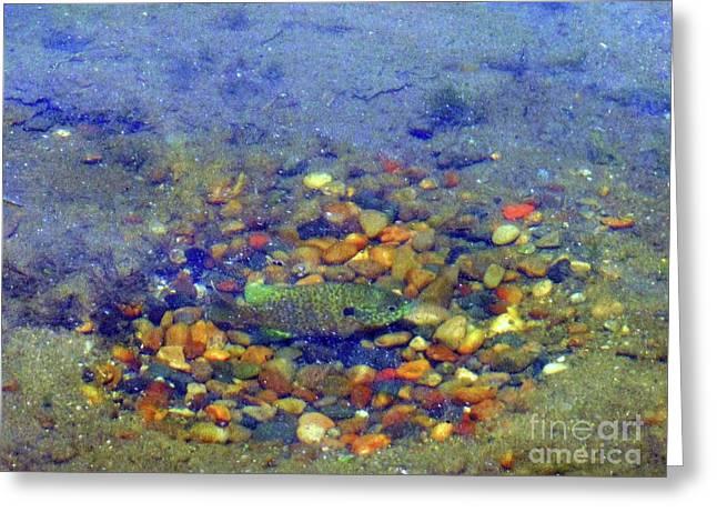 Fish Spawning Greeting Card