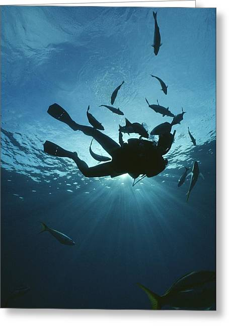 Fish Swim Around A Diver In The Cayman Greeting Card by Raul Touzon