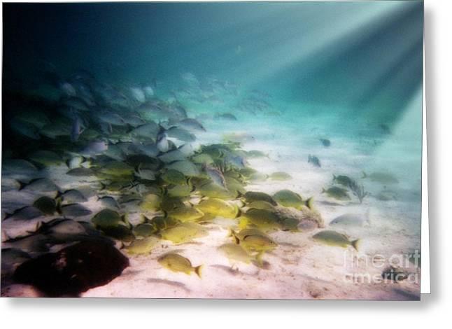 Fish Swim In The Light Greeting Card by Sven Brogren