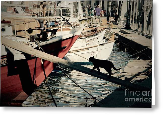 Fisherman's Cat  Greeting Card by Louise Fahy