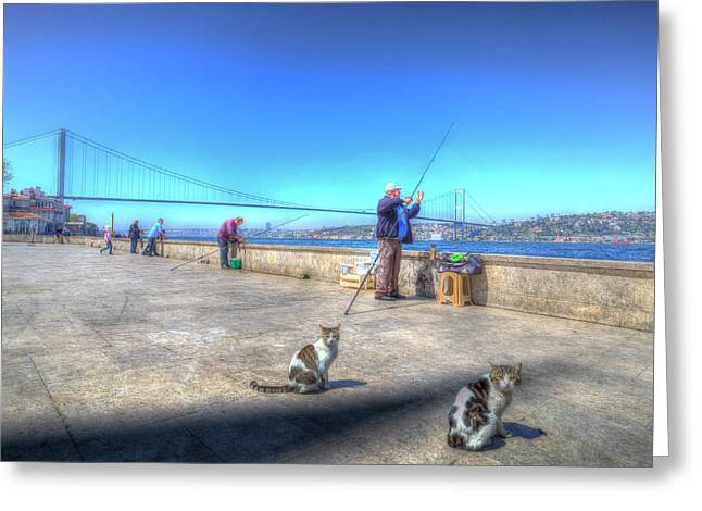 Fishermen And Cats Istanbul Greeting Card
