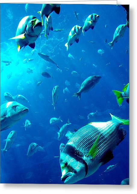 Fishes Greeting Card by Leena Kewlani