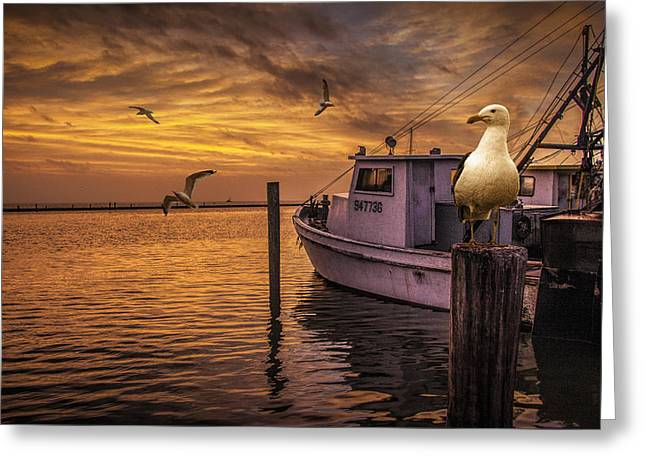Fishing Boat And Gulls At Sunrise Greeting Card by Randall Nyhof