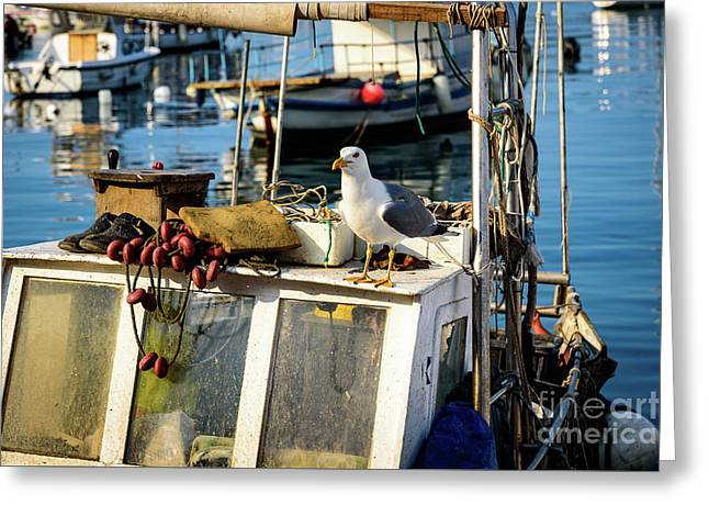 Fishing Boat Captain Seagull - Rovinj, Croatia Greeting Card