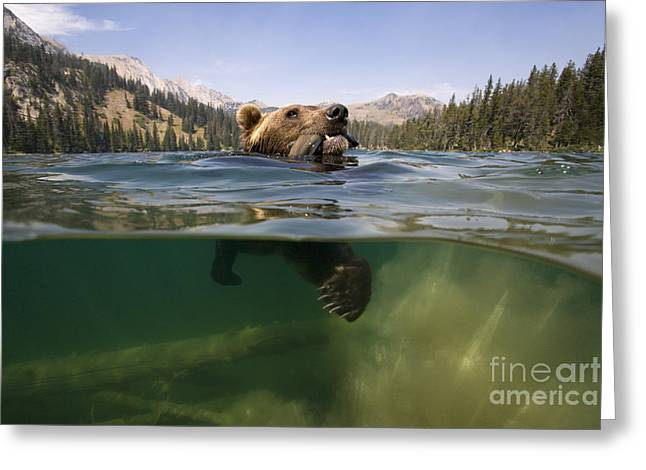 Fishing Grizzly Greeting Card