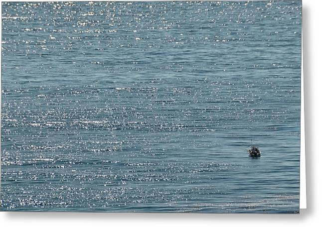 Greeting Card featuring the photograph Fishing In The Ocean Off Palos Verdes by Joe Bonita