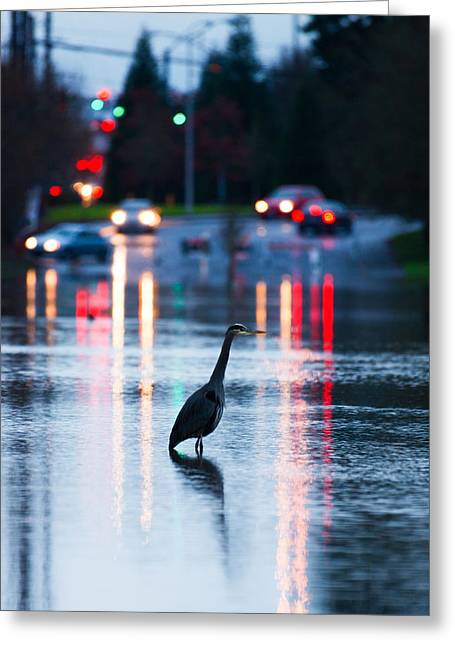 Fishing On Nyberg Lane Greeting Card by Patrick Campbell
