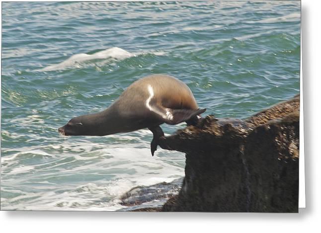California Sea Lions Greeting Cards - Fishing Sea Lion Greeting Card by Daniel Hebard