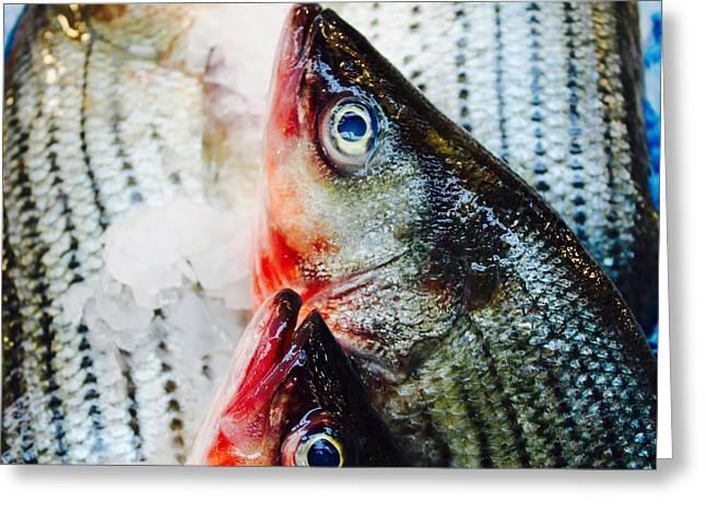 Fishy Greeting Card by Judy Bernier
