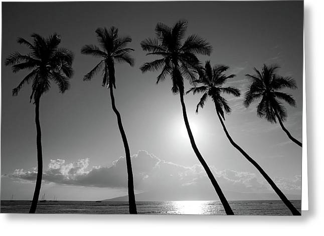 Coconut Palm Tree Greeting Cards - Five coconut palms Greeting Card by Pierre Leclerc Photography