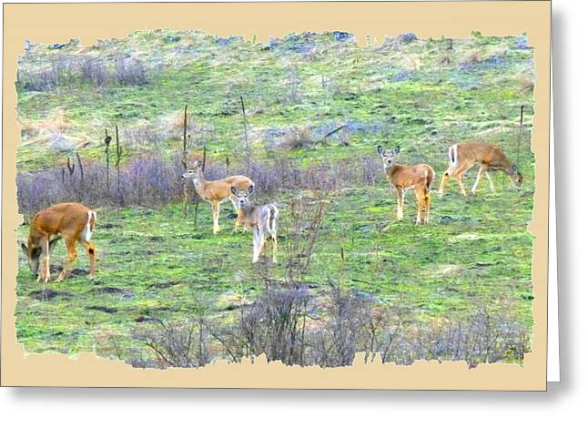 Five Deer Grazing Greeting Card by Will Borden