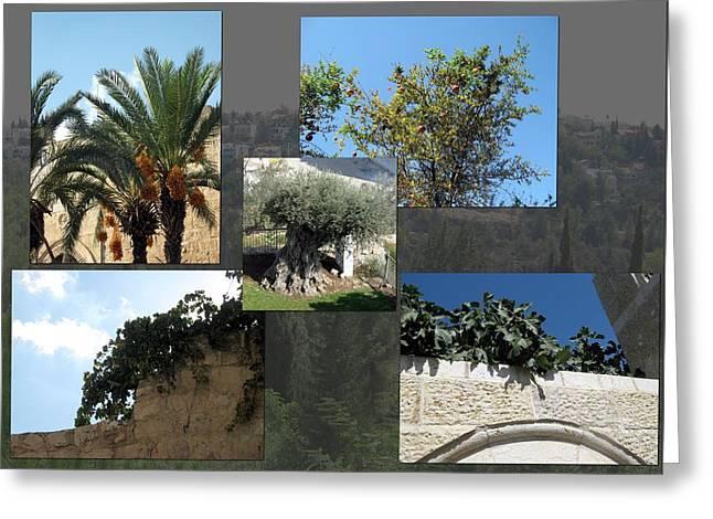 Five Fruit Of Israel Greeting Card by Menucha Citron