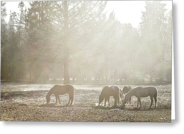 Five Horses In The Mist Greeting Card