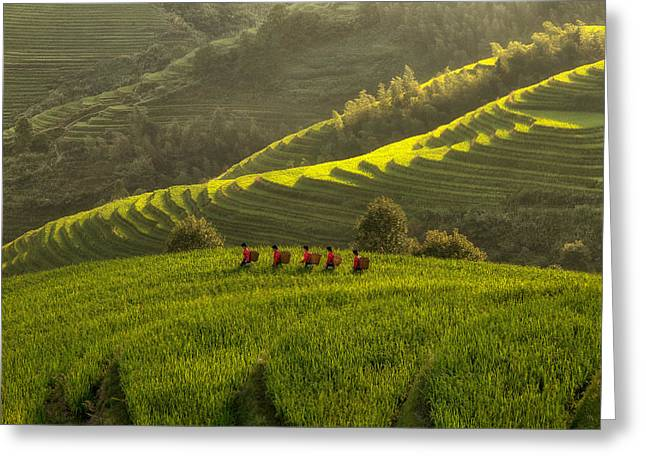 Five Ladies In Rice Fields Greeting Card by Max Witjes