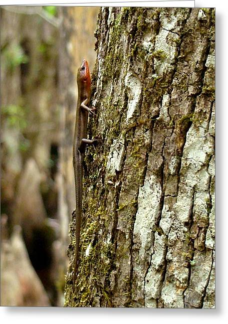 Five Lined Skink Greeting Card