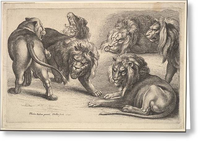 Five Lions And A Lioness Greeting Card by Wenceslaus Hollar