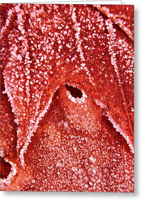 Five O'clock Frost Greeting Card by Gwyn Newcombe