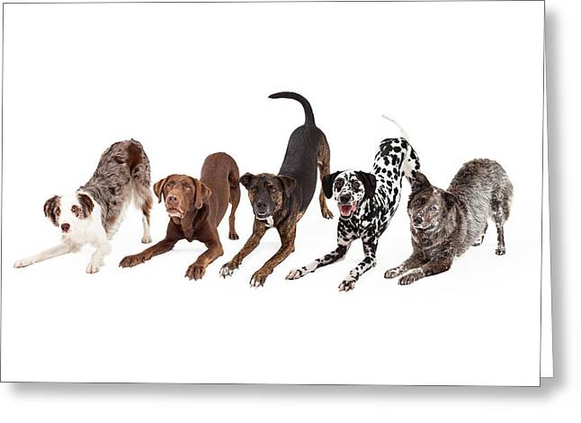 Five Playful Dogs Bowing Greeting Card by Susan Schmitz