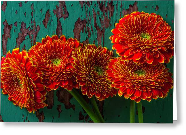 Five Rustic Mums Greeting Card by Garry Gay