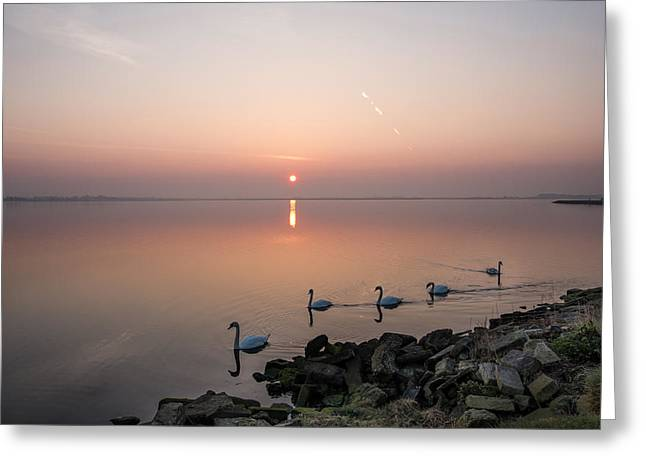 Five Swans At Dawn Greeting Card