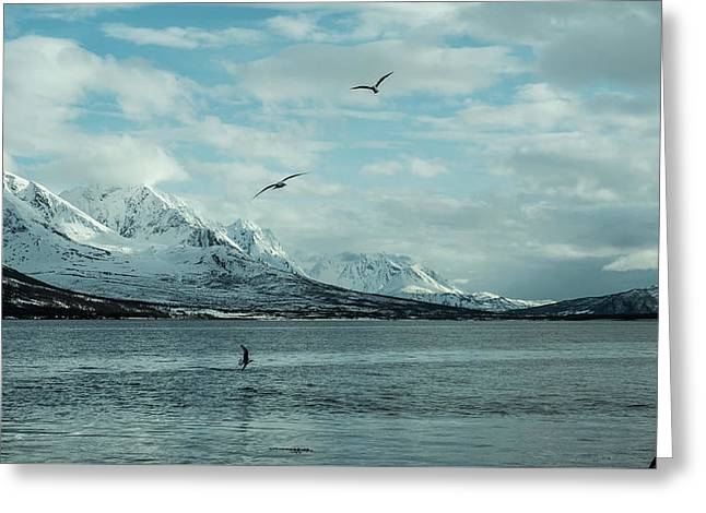 Fjord Landscape In The North Of Norway  Greeting Card