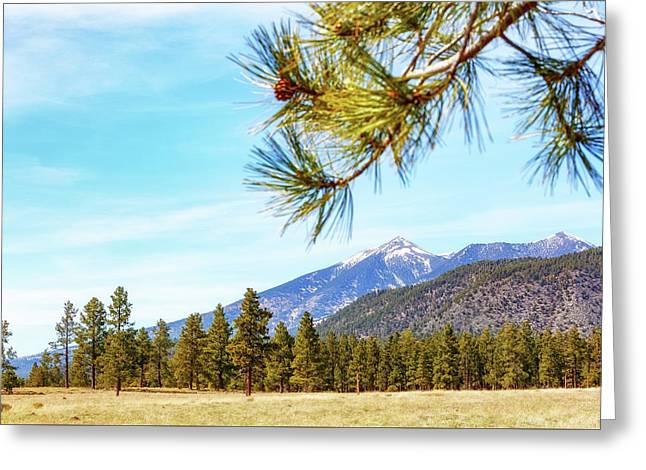 Flagstaff Arizona Mountains And Pine Trees Greeting Card by Susan Schmitz