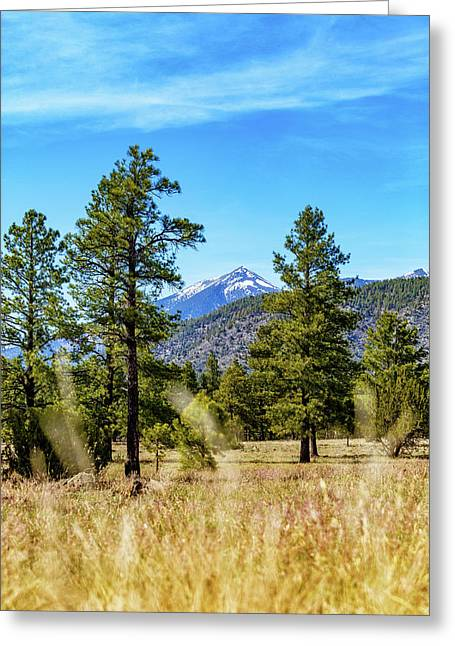 Flagstaff Arizona Park In Woods - Vertical Greeting Card by Susan Schmitz