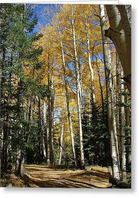 Flagstaff Aspen 796 Greeting Card