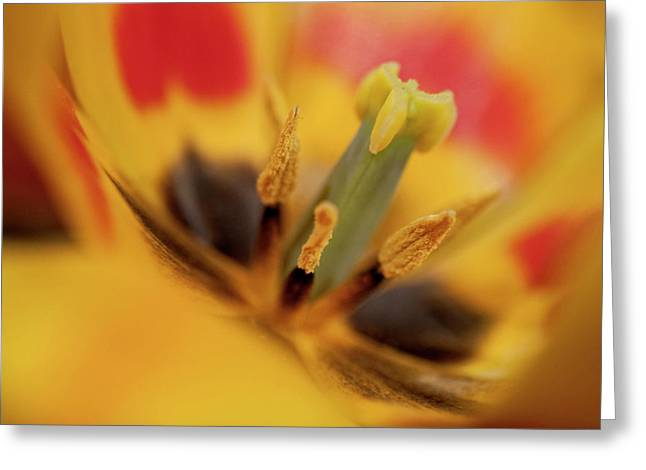 Angelini Greeting Cards - Flaiming Spring II visit www.AngeliniPhoto.com for more Greeting Card by Mary Angelini