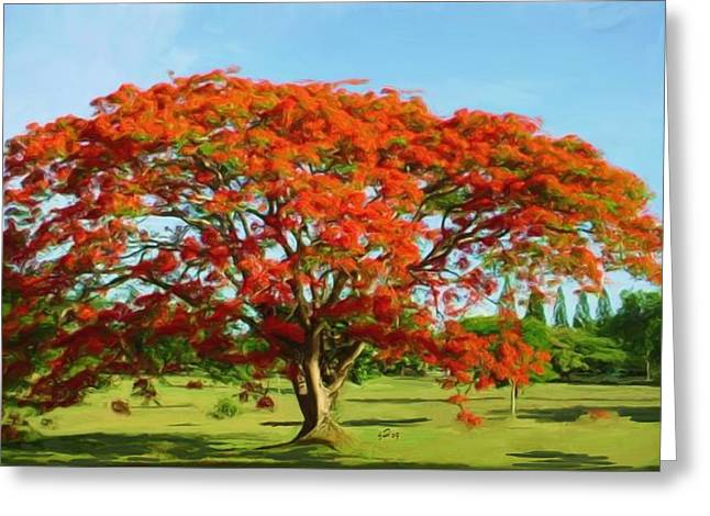 Flamboyan Royal Poinciana Greeting Card