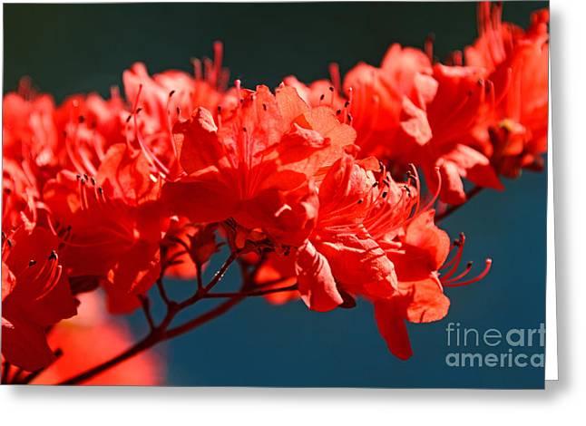 Flame Azalea Greeting Card by Jennifer Booher