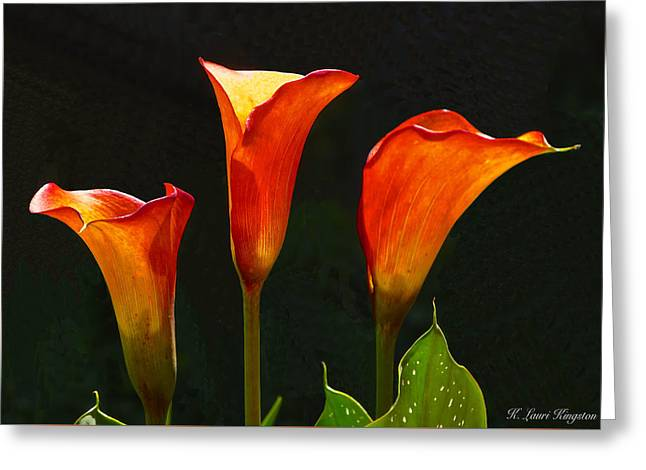 Flame Calla Lily Flower Greeting Card