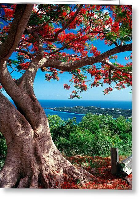 Flame Tree St Thomas Greeting Card