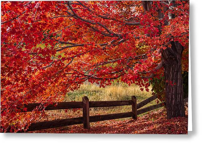 Flames On The Fence Greeting Card