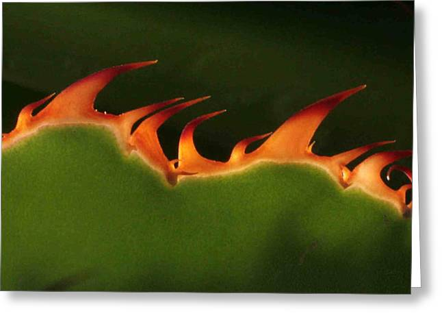 Flaming Aloe Greeting Card by Matt Cormons