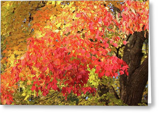 Flaming Autumn 3 Leaves Art Greeting Card by Reid Callaway