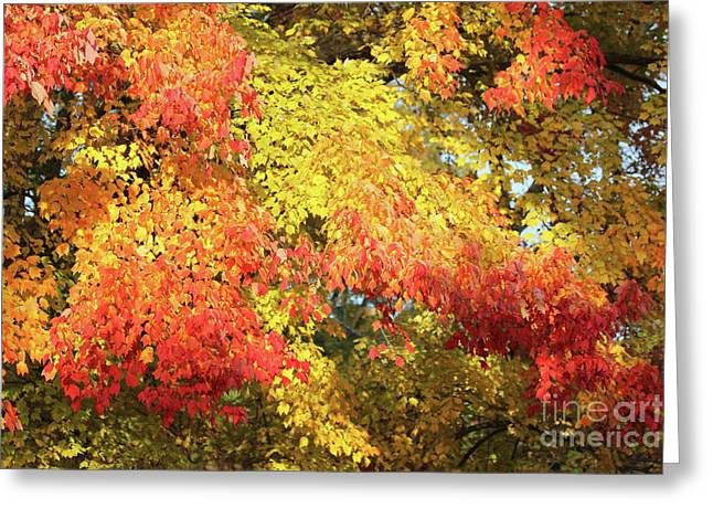 Flaming Autumn Leaves Art Greeting Card by Reid Callaway