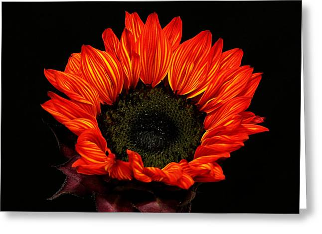 Greeting Card featuring the photograph Flaming Flower by Judy Vincent