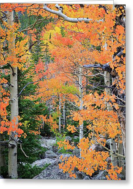 Greeting Card featuring the photograph Flaming Forest by David Chandler