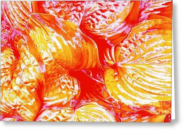 Flaming Hosta Greeting Card