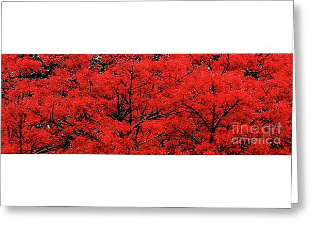 Greeting Card featuring the photograph Flaming Red Panorama II By Kaye Menner by Kaye Menner